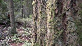 Regenwald, pazifischer Nordwesttransportwagenschuß 4K, UHD stock footage