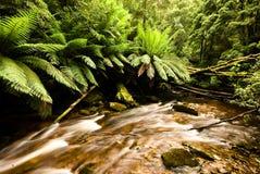 Regenwald in Tasmanien lizenzfreies stockbild