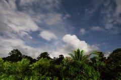 Regenwald Treetops und sternenklarer Himmel Stockbild