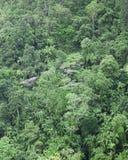Regenwald von oben Stockfotos