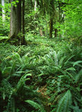 Regenwald, Washington lizenzfreie stockbilder