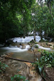 Regenwald-Wasserfall Stockbilder