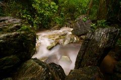 Regenwald. Wasserscheide. Strom von den Bergen. Lizenzfreie Stockfotos