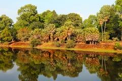 Regenwald widergespiegelt im See Stockfotos