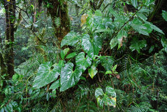 Regenwaldanlagen Stockbild