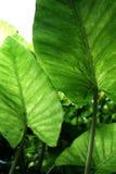 Regenwaldblätter Stockbild
