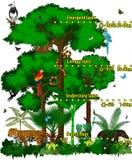 Regenwalddschungel überlagert Vektorillustration Vector grünen tropischen Walddschungel mit verschiedenen Tieren Lizenzfreie Stockfotografie