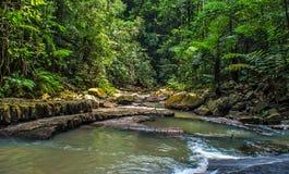Regenwalddschungel Stockfoto