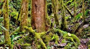 Regenwaldfeld Stockbilder