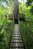 Regenwaldkabinendachweg Stockbild