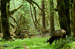 Regenwaldlebensraum stockbild