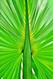 Regenwaldpalmblatt u. -hintergrund Stockbilder