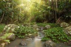 Regenwaldsonnenaufgangstrahlen   stockfotos