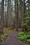 Regenwaldspur Lizenzfreies Stockbild