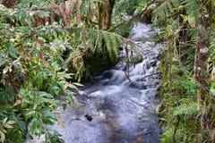Regenwaldstrom stockbild
