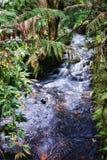Regenwaldstrom stockfoto
