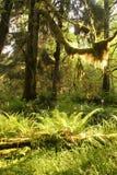 Regenwaldvegetation Lizenzfreies Stockfoto
