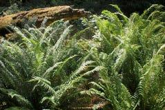 Regenwaldvegetation Lizenzfreie Stockbilder