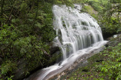 Regenwaldwasserfall Lizenzfreies Stockbild