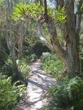 Regenwaldweg stockfoto