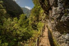Regenwaldweg in Gebirgstal Stockfoto