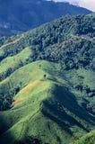 Regenwaldzerstörung in Thailand stockbild