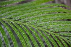Regenwasser auf Pflanzenblättern Lizenzfreie Stockbilder