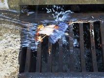Regenwasserentwässerung Lizenzfreies Stockfoto