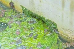 Regenwasserrohr im Frühjahr gosse Ein Klotz in der Gosse Stockbild