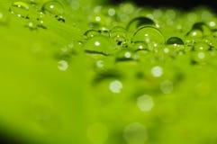 Regenwassertropfen auf grünem Blatt Stockbild