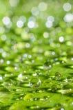 Regenwassertropfen auf grünem Blatt Stockfotografie