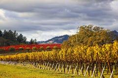 Regenwolken over mooi geel wijngaardlandschap stock foto's