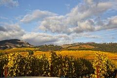 Regenwolken over mooi geel wijngaardlandschap stock afbeelding
