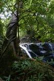 Regenwoud royalty-vrije stock foto
