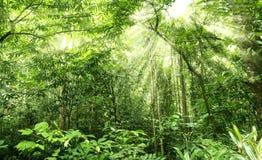 Regenwoud royalty-vrije stock afbeelding