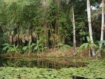 Regenwoud stock foto's