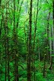 Regenwoud Stock Foto