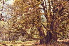 Regenwoud Royalty-vrije Stock Foto's