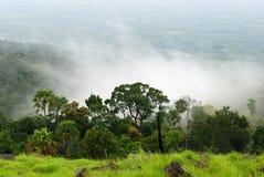 Regenwoud stock afbeelding