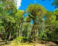 Regenwoud bij het Nationale Park van Tikal in Guatemala royalty-vrije stock afbeelding