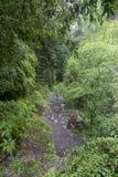 Regenwoud bij Los Tilos La Palma Canarische Eilanden stock afbeelding