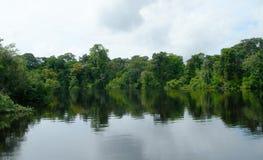 Regenwoud dat in wateren Brazilië wordt weerspiegeld Royalty-vrije Stock Foto's