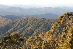 Regenwoud Dawn royalty-vrije stock afbeeldingen