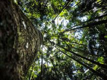 Regenwoud die omhoog eruit zien royalty-vrije stock afbeeldingen