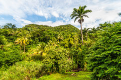 Regenwoud, Dominica stock afbeelding