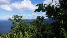Regenwoud door carribean Stock Afbeelding