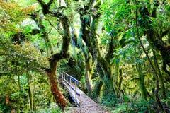Regenwoud in het Nationale Park van Egmont, Nieuw Zeeland Royalty-vrije Stock Afbeeldingen
