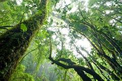 Regenwoud, het Noorden van Thailand royalty-vrije stock fotografie