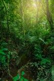 Regenwoud, Khao Yai Royalty-vrije Stock Foto