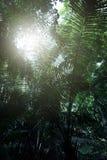 Regenwoud in Krabi in Thailand Stock Afbeelding